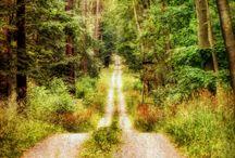 ~I'd Walk a Mile~~~ / by Diane Harris-Day