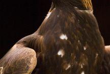Birds/ Fåglar
