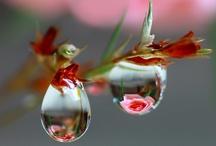 Des belles  fotos ///Beautiful  ♥♥♥ / by Valeryagris