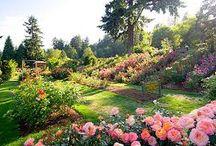 A kertész kertje