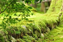 Of Green and moss