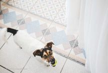 Dogs, cats, birds and your other pets at your wedding