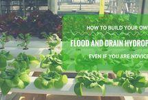 Flood and Drain Hydroponics System