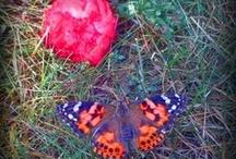 Butterfly / by Kel Gera