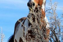 HORSES / wild mustangs and horses in general / by Monica Whalen