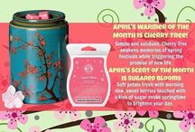 Warmer of the Month!!  / Warmer of the month & Scent of the month are 10% off! Christylipscomb.scentsy.us