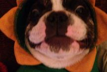 Happy face / Frenchbulldog