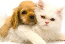 Pet's / by Annie Reynolds