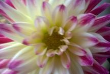 pretty flowers / by Mandy Fisher