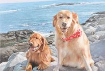 Pets / Beautifully painted oil portraits of pets.   Order yours today www.oilportraits.com