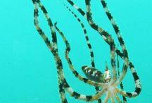 Dabirahe Resort Diving with Maka-Maka | Underwater Creatures