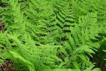 Garden Design: Evergreens