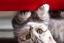 kucing lucu yappz