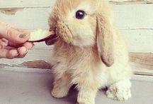 so cuteeeee <3