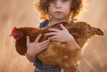 Children & Chickens