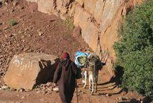 Morocco / The beauty of Morocco