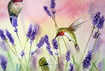 Lavender and hummingbirds