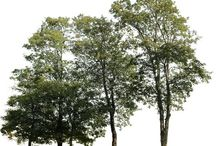 деревья для коллажа