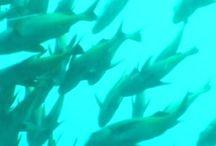 Fisheries Monitoring
