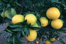 Un día en el campo / En el siguiente panel os mostramos varias instantáneas de nuestra visita a los campos de Naranjas de mi huerta. Esperamos que sean de vuestro agrado. www.naranjasdemihuerta.com