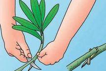Garden rozmnażanie i cięcie roślin