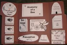 Homeschool: Bees / Studying bees? You've come to the right place. Find tons of printables, crafts, activities, recipes and MORE to make your unit a success!!