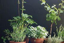Plants in interior