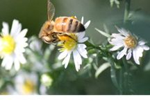Wildflower Pollinator Garden / May all your weeds be wildflowers... A list of plants for our Wildflower Pollinator Garden, for bees and butterflies - along with gardening tips and photos.