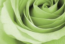 """""""Shades of Honeydew and Lime"""" / by noelene ward"""