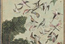 Birds Illustrated
