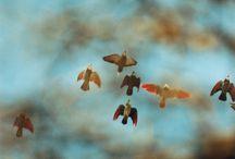 Flora y fauna / by Chantal Bernsau