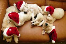 Tis the season! / Christmas