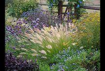 Garden / by Debbie Clark