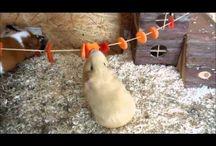 DIY Guinea Pig Fun