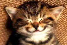 Animal Love / Cats, Kittens, Dogs, Puppies, Butterflies, rabbits, cubs, birds......