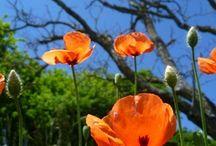 Mon site de présentation de mes photographies Céline Photos Art Nature / Mon site réalisé sur Wiféo de mes photographies au fil des jours et des saisons