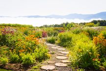 Gardens of Trapp Family Lodge / The beautiful grounds and gardens of Trapp Family Lodge in Stowe, Vermont. / by Trapp Family Lodge