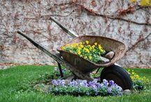 garden :) / by Katryna Archione