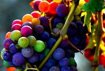 Grapes & Glasses / Because wine is beautiful from start to finish