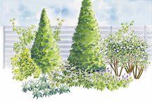 Puutarhan suunnittelu ja kasvit