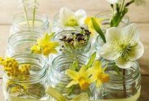 Interiors/Plants&Flowers