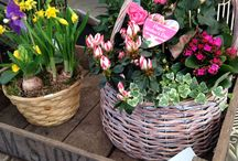 Creations / All things you can do with flowers and spring bulbs.
