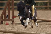 Horses\cloths