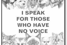 A VOICE FOR ANIMALS ♥♥♥ / ANIMAL CRUELTY AND ABUSE AWARENESS; PETITIONS, NEWS ARTICLES, DONATIONS NEEDED, LOST PETS, ETC.......LET'S END ABUSE!!!!                                                                                                                                                              PLEASE DON'T PIN ADOPTIONS TO THIS BOARD! THANK YOU! ♥