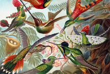 Bird Art / by Art Cove Greeting Cards and Blog