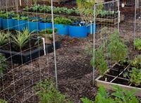 Plants N garden / indoor terrariums, plants. gardening in florida.