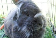 My Baby / Gandore- The best bunny in the world. / by Irene Knott