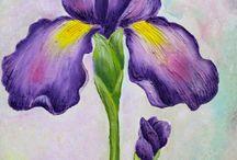 Iris Bloemen