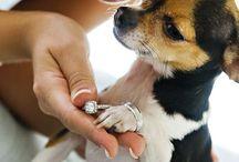 Állatok az esküvőn-Animals at the wedding
