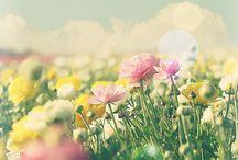 Flowers / by Sherryl Kwan